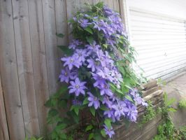 Flower Fence by withinmeloveresides1