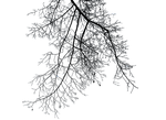 Branches III PNG by simfonic