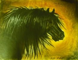 Black Stallion by Maridia99