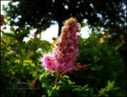 Passion of Summer by Baary