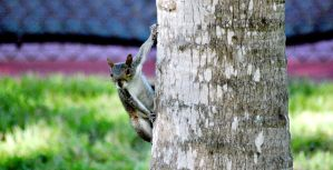 Squirrel on a tree by Anarioxan