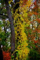 Fall colors on 76west by smirkyface