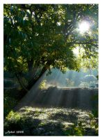 Jour naissant - Growing Light by achel
