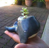 Grey Whale Planter by PinkChocolate14