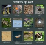 2015 Review by MrWitchblade