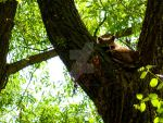 Raccoon in Tree by SEnigmaticX