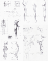 Anatomy sketches 01 by victory-a13