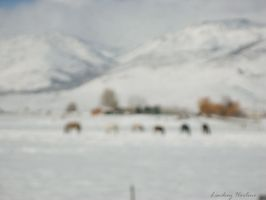Horses in the pasture by Lin-Z89