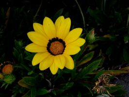 Flower Stock 19 by hp-abrasion
