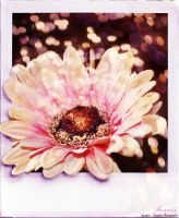Polaroid Flower by GinAngieLa