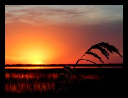 Lonely Reed by Sarah--Lynne
