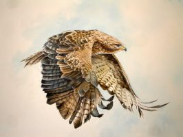 Buzzard in Flight by Atriedes