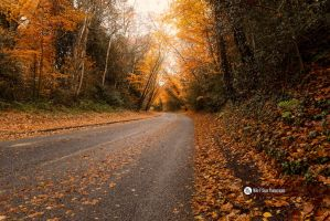 Take The Road Of Gold. by MikeFShaw