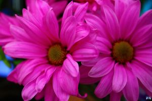 Birthday Flowers by LifeThroughALens84