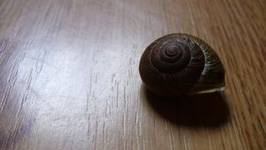 Snail Shell by PamplemousseCeil