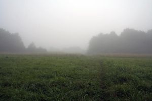 Misty Landscape 01 by CD-STOCK