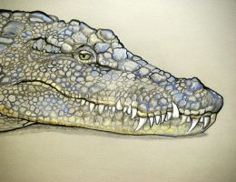 Nile Crocodile by HouseofChabrier