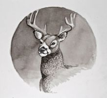 Deer Study No. 3: Portrait by lawyersloveandbones
