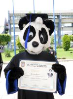 A graduated panda by pandapaco