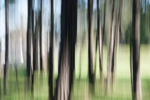 Camera Movement in the Woods by lilmoz