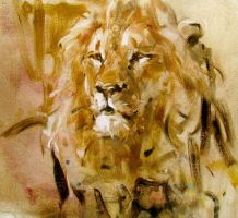 a tired lion by alrasyid
