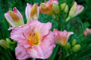 Day Lily by Nitersss