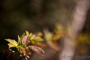 Looking down the branch - Day 103 - 13/04/13 by oEmmanuele