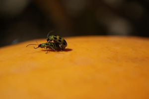 50 pt life: bugs on a pumpkin by bfoflcommish