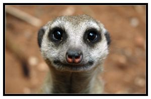 Timon?? by ranmor