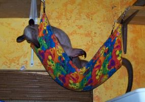 Ori in the baby hammock by TamanduaGirl