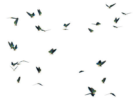 Butterfly Swarm 01 PNG Stock by Roy3D