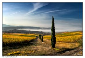 Vineyard in Tuscany by Marcello-Paoli