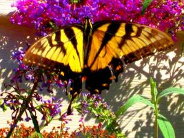 Yellow Butterfly by Squeemishness