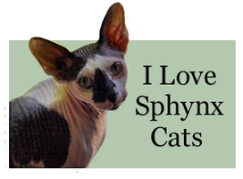 I Love Sphynx Cats by Loulou13