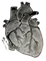 Human Heart by WhySoPlastic