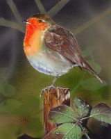 Robin by Venet
