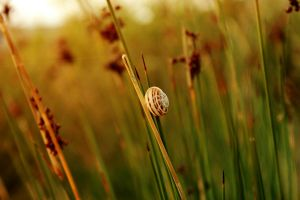 .Snail. by Wicked-Lexie