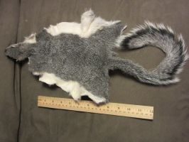 Grey Squirrel pelt for sold! by TheNewCoyote