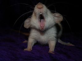 raaaaawr by Itchys-rats