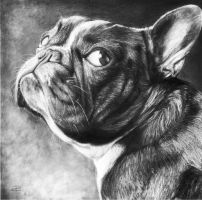 bouledogue francais by arcitenens