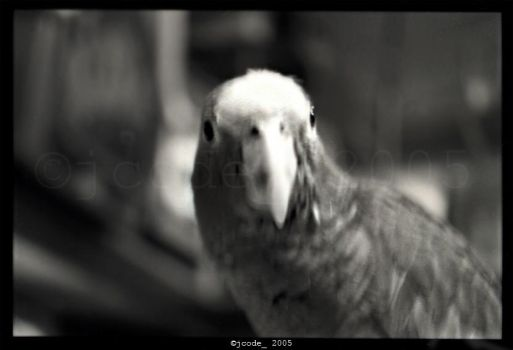 the parrot by jcode