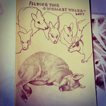 Wallabies by wispwolf