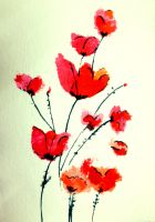Red Poppies by nupursanyal