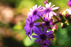 purple flowers by AndreaP95