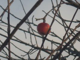 Red Winter Apple by GIANTGIRL