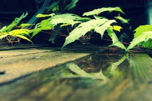 Ivy Reflections by ThePenniesInMyShoes