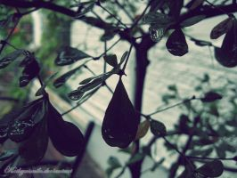 Drops are cool. by kathyxsmile