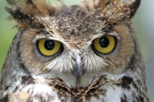 Eyes of the Owl by zootnik