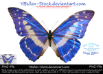 Blue Butterfly by YBsilon-Stock by YBsilon-Stock