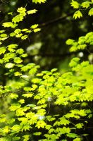 a sea of green by picturework-memory